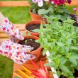 Spring in the garden, potting flowers - Stock Photo