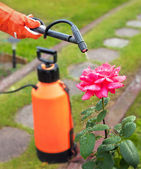 Protecting plant from vermin with pressure sprayer — Stock Photo