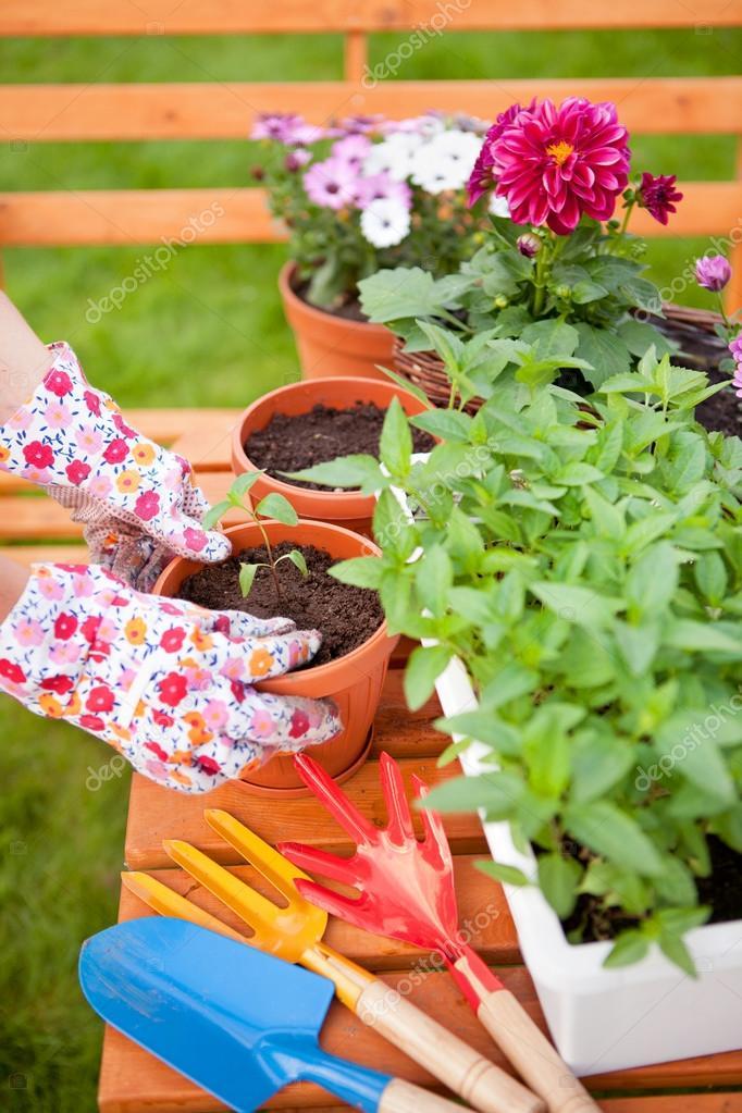 фото горшечных цветов:
