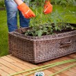 Woman gardening — Stock Photo