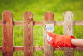 Painting wooden fence — Stock Photo