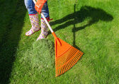Woman raking freshly cut grass — Stock Photo