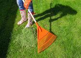 Woman raking freshly cut grass — Stock Photo