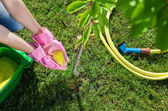 Woman gardener fertilizing young cherry tree — Photo