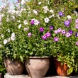 Composition of various flower pots with flowers — Stock Photo