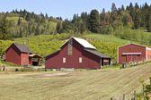Barns and field Hood River OR. — Stock Photo