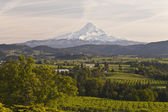 Mt. Hood and Hood River valley panorama. — Stock Photo