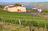 Maryhill winery Columbia River Gorge. — Stock Photo
