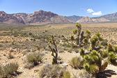 Red Rock Canyon landscape Nevada. — Stock Photo