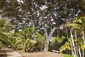 Balboa park gardens San Diego California. — Stock Photo