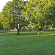 Stock Photo: Park panoramwith trees and field.