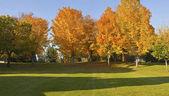 公共の公園のパノラマ グレシャム オレゴン州. — ストック写真