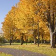Golden colors in Autumn Bellavista park Oregon. — Stock Photo