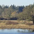 Stock Photo: Tualatin national wildlife refuge Oregon.