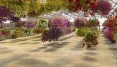Indoor flower display Willamette valley Oregon. — Stock Photo