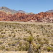 Red Rock Canyon Las Vegas NV. — Stock Photo #51033431