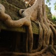 Mystical Ta Prohm - Stock Photo