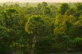 Selva camboyana — Foto de Stock