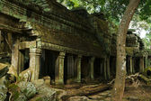 Mystical Ta Prohm — Stock Photo
