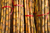 Bamboo sticks for sale — Stock Photo