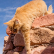 Cat in the desert — Stock Photo