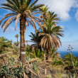 La Gomera Landscape — Stock Photo