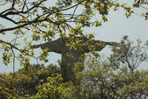 Christ the redeemer statue with branches infront — Stock Photo