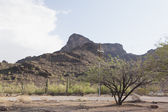 Mountains and Saguaro Cacti plants in the Arizona desert — Stock Photo