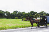 Horse and carriage in Amish Country — Stock Photo