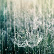 Spiderweb with dewdrops — Stock Photo