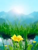 Flower on meadow — Stock Photo
