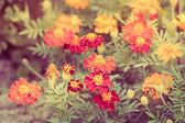 Květiny v zahradě — Stock fotografie