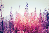 Flowers at sunset — Stock Photo