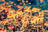 Flowers in the garden — Stock Photo