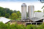 Молочная ферма — Стоковое фото