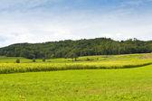 Landsbygd — Stockfoto