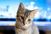 Podnikání kitty — Stock fotografie