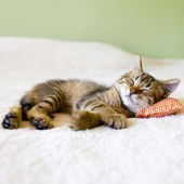 Pequeño gatito — Foto de Stock