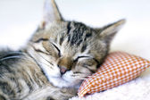 Gato pequeño — Foto de Stock
