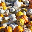 Pumpkins — Stock Photo #16559473