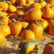 Pumpkins - Lizenzfreies Foto
