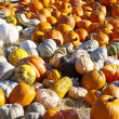 Pumpkins - Stock Photo
