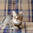 Small Cat - Stockfoto