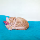 Small Kitty With Red Pillow — Stockfoto