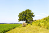American Farmland With Blue Sky — Stock Photo