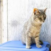 Gato al aire libre en granja americana — Foto de Stock