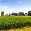 Countryside Farm in the morning — Stock Photo #17200539