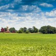 American Countryside in Summer Time — Stock Photo