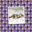Cats Wallpaper (Vintage Pattern Page) - Stockfoto
