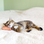 Small Kitty With Red Pillow and Mouse — Stock Photo